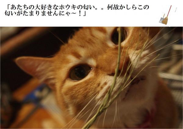 繝帙え繧ュ_convert_20120630211503