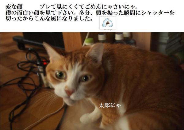 鬘農convert_20120703214736