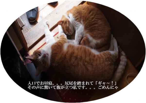 蟆サ蟆セ_convert_20120714220934