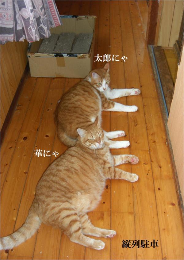 邵ヲ_convert_20120715224019
