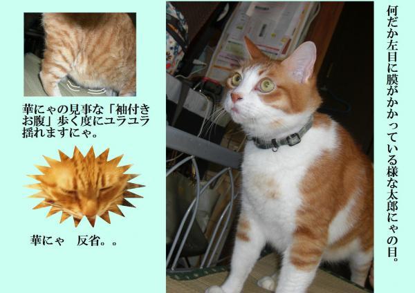 縺キ繧雲convert_20120716215855