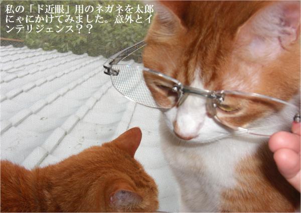 繧√′縺ュ_convert_20120721180846