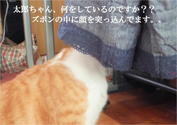 繧コ繝懊Φ_convert_20120910220654
