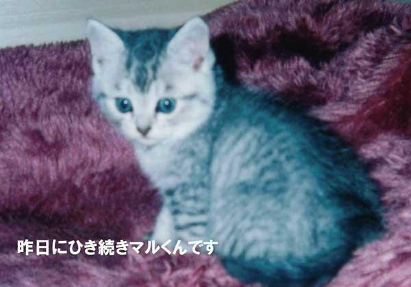 マルちゃん、子猫1
