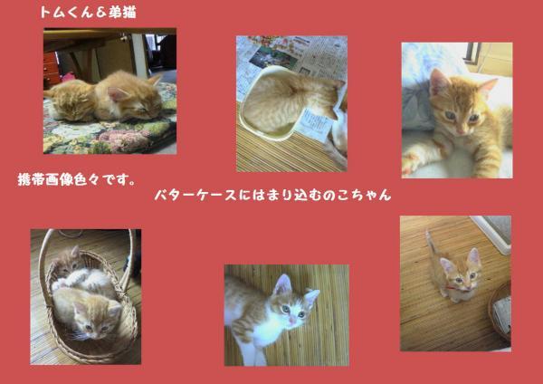 謳コ蟶ッ_convert_20121029224713
