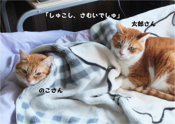 縺イ縺輔・_convert_20121110213304