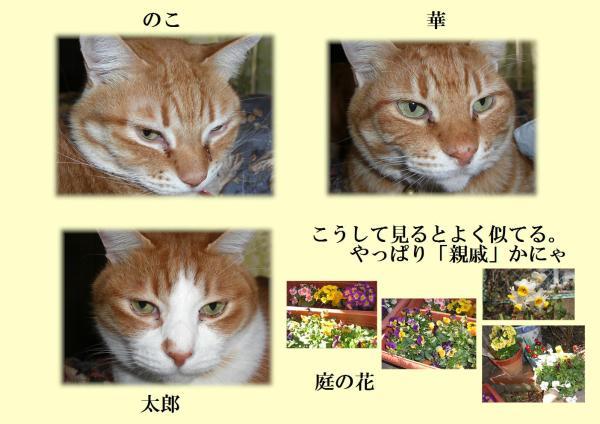 莨シ縺ヲ繧祇convert_20130224194712