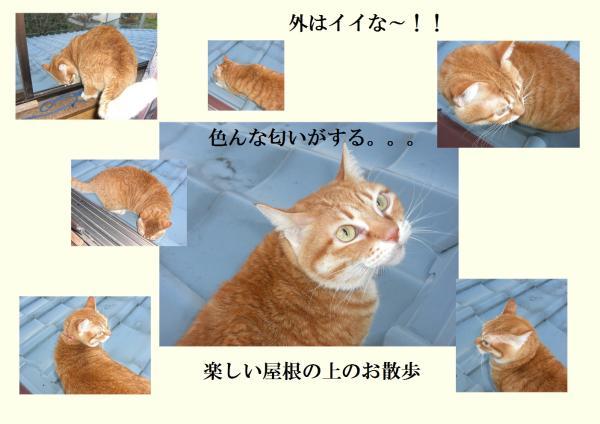 縺輔s縺ス_convert_20130227214404
