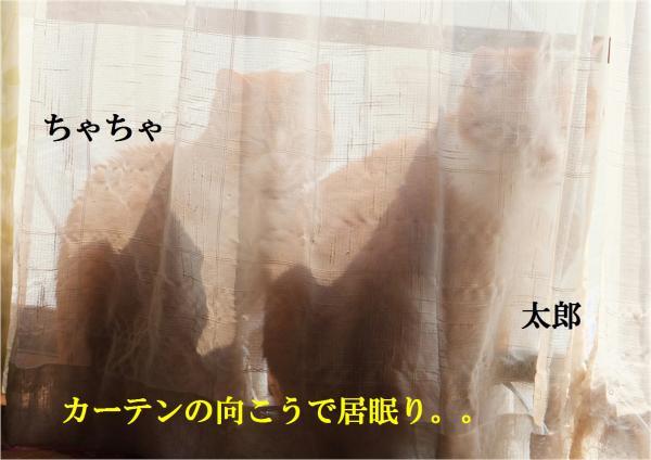 螻・悛繧垣convert_20130309222645