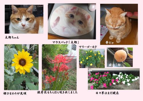 蠎ュ縺ィ迪ォ_convert_20140924233352
