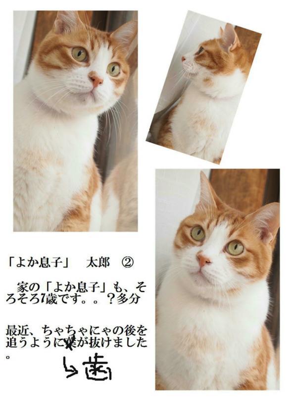 2_convert_20120612221137.jpg