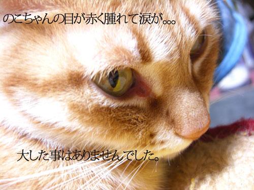 CIMG3659_20111211214845.jpg