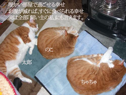 CIMG3701.jpg