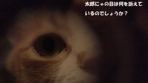 DSCF0036_20120802225820.jpg