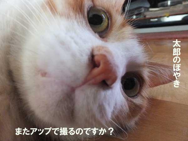DSCF0260_20121010223834.jpg
