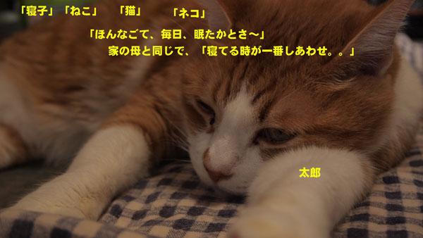 PC141566_20130225212244.jpg