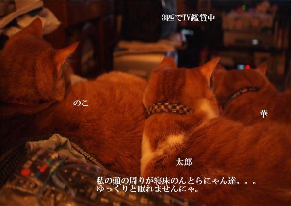 TV_convert_20120414220810.jpg