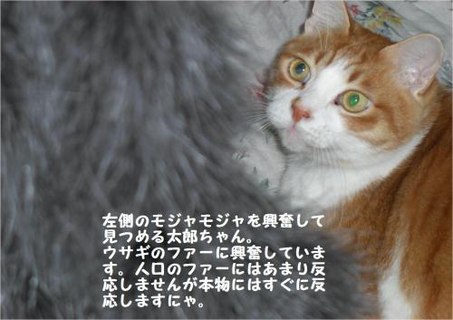 fur_convert_20120107220240.jpg