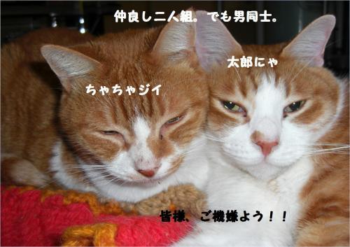 goki_convert_20120114220442.jpg