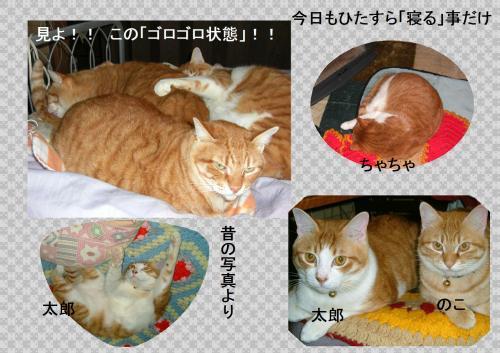 goro_convert_20120119222011_20120119223049.jpg