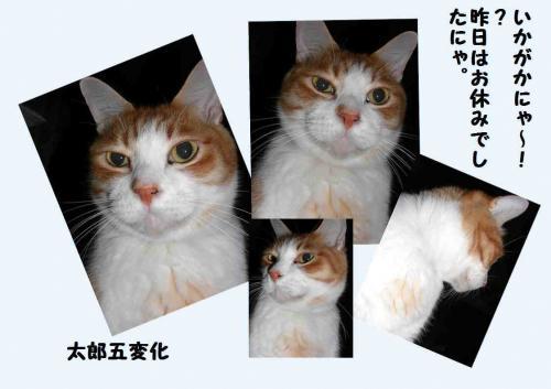 henn_convert_20111220223457.jpg