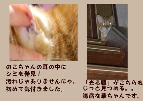 hi1_20111108222923.jpg