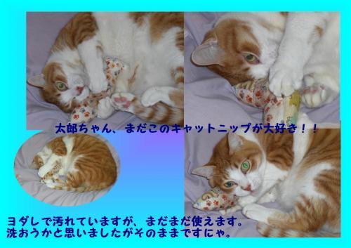 mada_convert_20120112223124.jpg