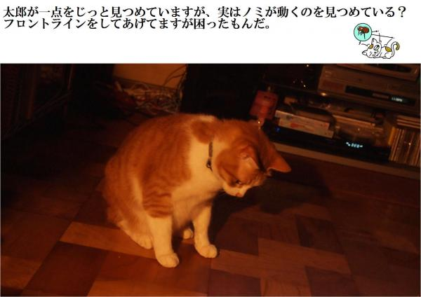 nomi_convert_20120701212759.jpg