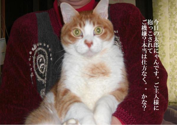 shika_convert_20120127215908.jpg