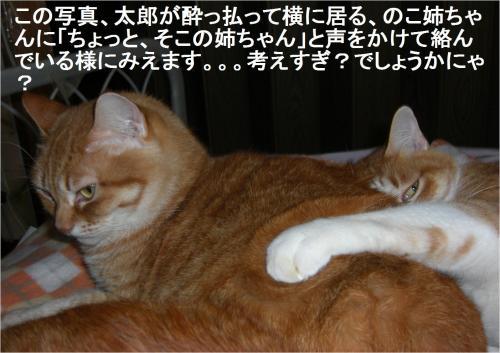tano_convert_20120119222044_20120119223059.jpg
