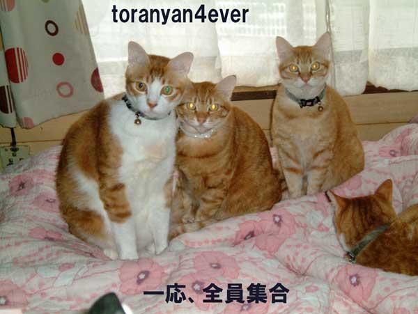 top_20120916205232.jpg