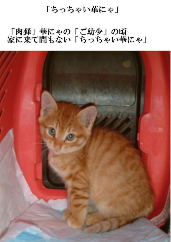 top_convert_20120617204615.jpg