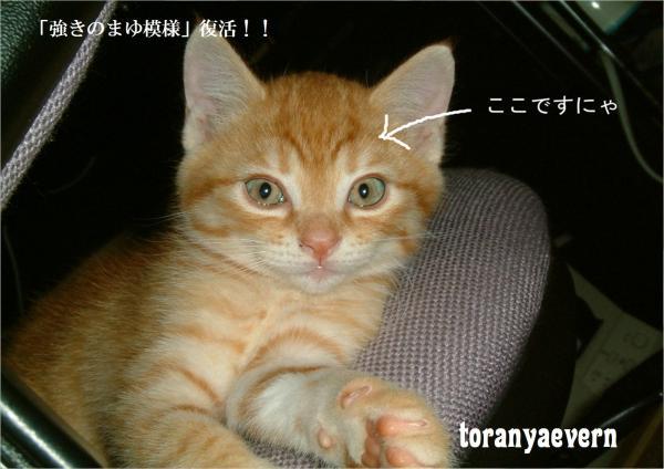 top_convert_20120712225431.jpg