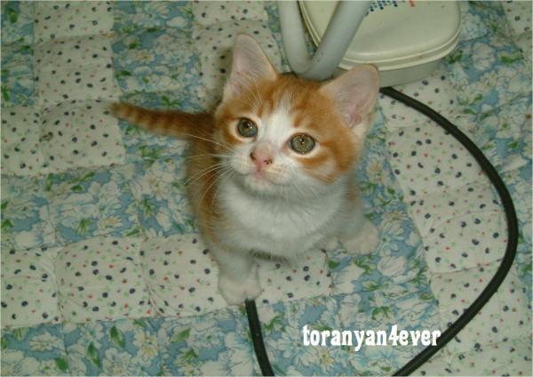 top_convert_20120718222526.jpg