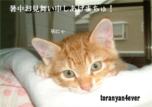 top_convert_20120724000646.jpg