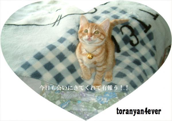 top_convert_20120727221231.jpg