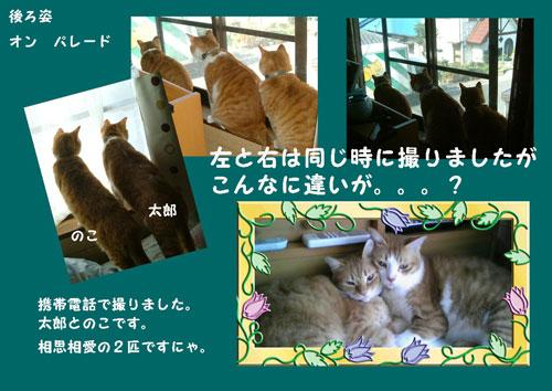ushiro1_20111102213807.jpg