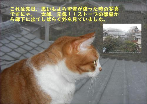 yu_convert_20120110225319.jpg