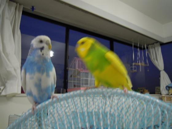 ルンルンとレモン