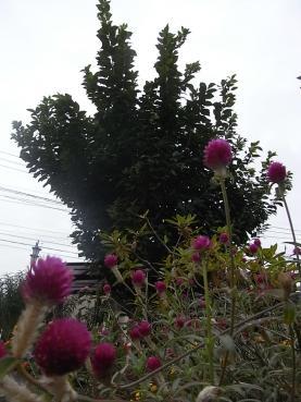 005_20101009103551.jpg