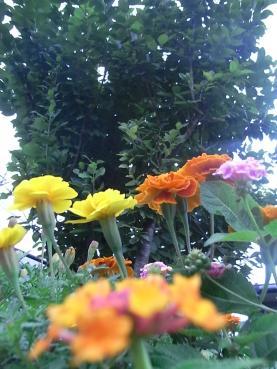 009_20101009103649.jpg