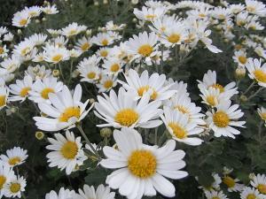 010_20101111095933.jpg