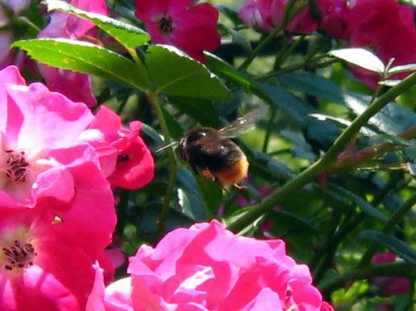 20100602蜂