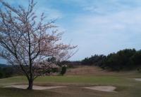 14番ホールの桜