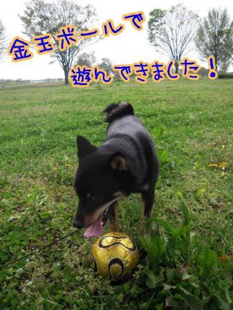 100429-2_20100501000648.jpg