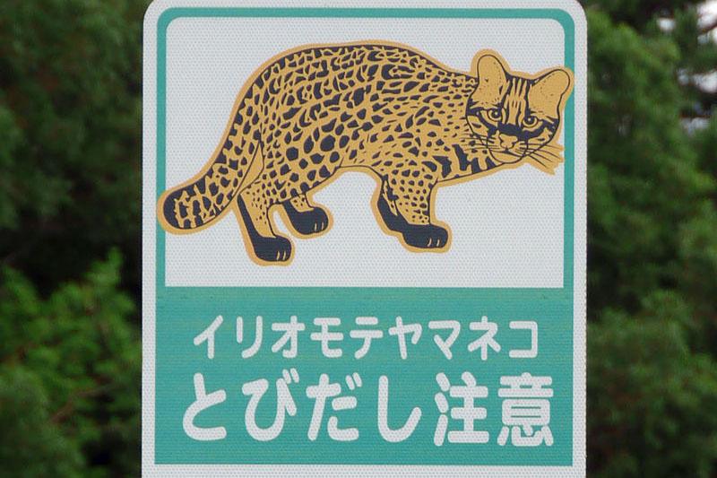 800px-Iriomote_yamaneko_warning_sign.jpg