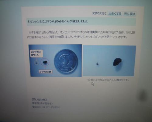 P2060002_convert_20130214210404.jpg