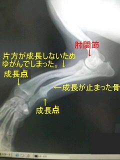 009tenmaeashi.jpg