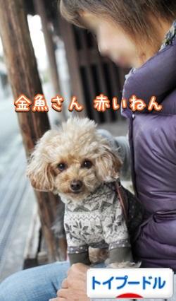 020bnIMG_6653.jpg