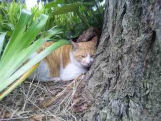 爪とぎの木の下で